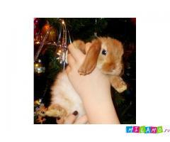 Продажа карликовых кроликов из Питомника