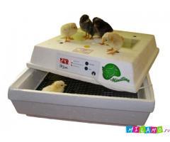 Бытовые инкубаторы Лелека для яиц от НПК Минилайн