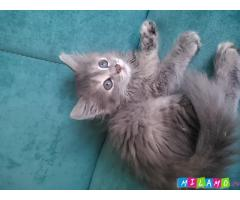 Котёнок 2 месяца