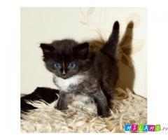 Котенок на усыновление бесплатно