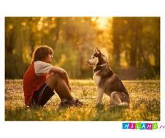Дрессировка собак в Елабуге