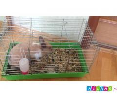 Продам декоративног кролика