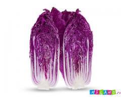 Семена пекинской капусты KS 888 F1 фирмы Китано