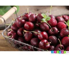 Крупномеры вишни от производителя