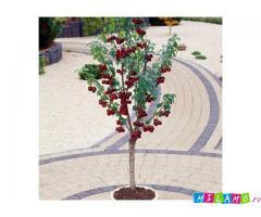 Колоновидные деревья из Подмосковного питомника