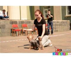 Онлайн-Дрессировка щенков и собак