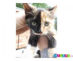 Чудесные котята в поисках дома