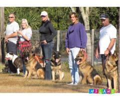 Дрессировка послушанию собак в Набережных Челнах
