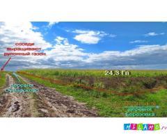 Продам 24,3 Га возле деревни Березовка